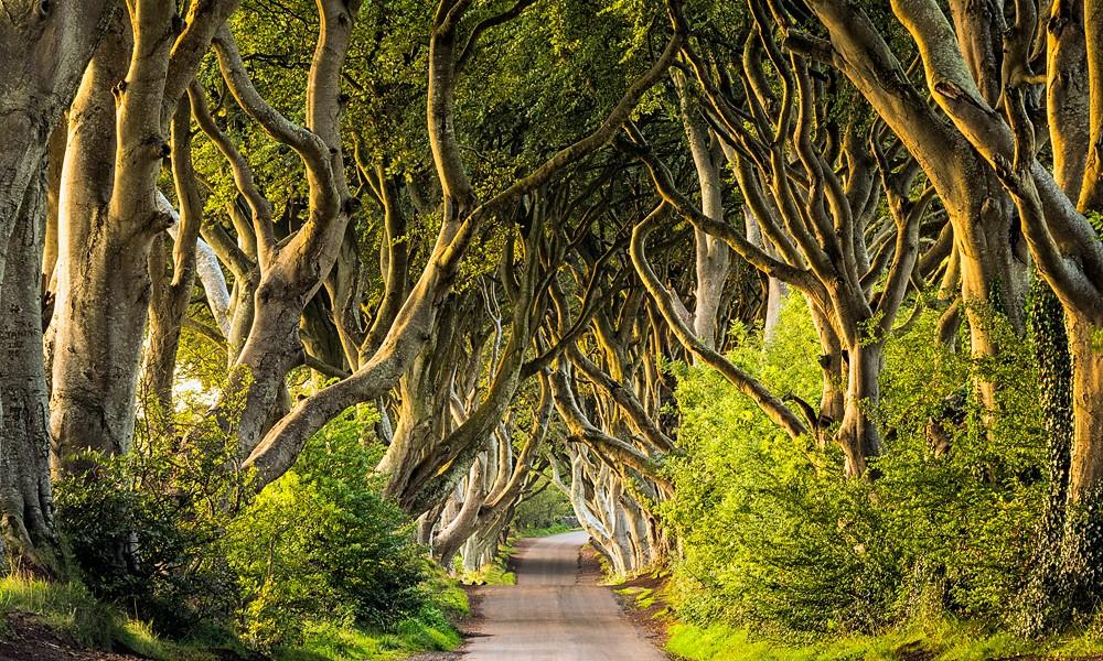 Fotoreise Irlands Norden - Dark Hedges