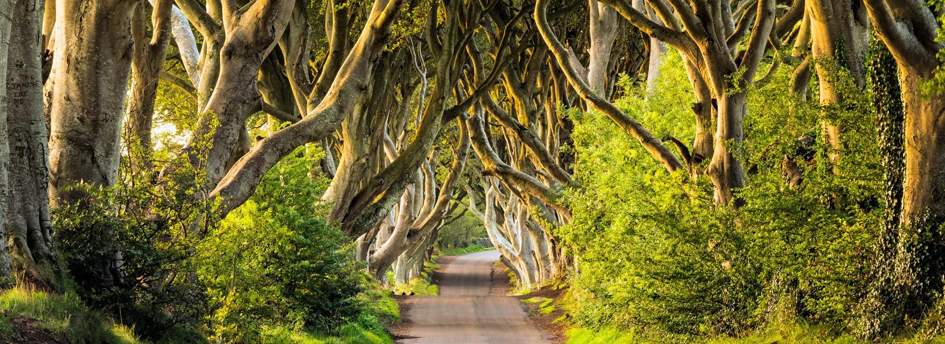 Irlands Norden
