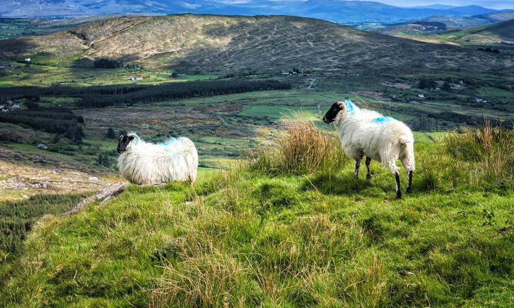Fotoreise Irland - West Cork - Mount Gabriel